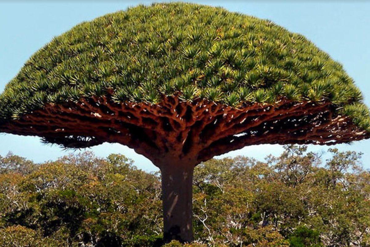 D'un arbre d'Amazonie à notre peau pour notre plus grand plaisir la crème experte anti-âge